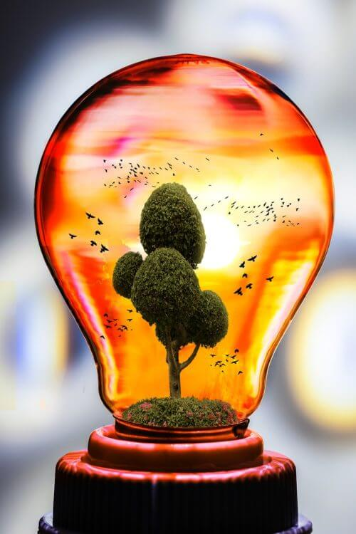 ecosystem-growing-in-a-light-bulb